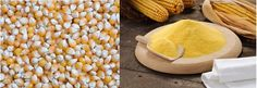 Corn (Maize): Health Benefits, Side Effects, Fun Facts, Nutrition Facts and History Healthy Corn, Corn Maize, Cottage Cheese Nutrition, Nutritional Value, Diet And Nutrition, Health Benefits, Fun Facts, Dinner, Vegetables