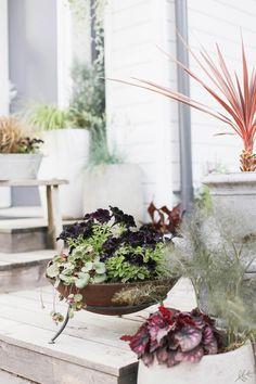 Mustat petuniat Wreaths, Lights, Plants, Instagram, Home Decor, Decoration Home, Room Decor, Planters, Bouquet