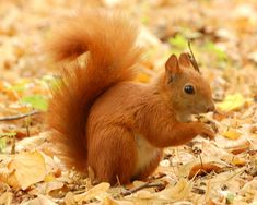 squirrels | Squirrels are recognizable to very nearly every living soul. More than ...