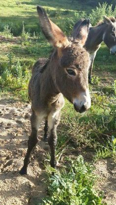 This is Willow. Born to two very happy adoptive parents last week. You are in a really good place, Willow. Enjoy!     Courtesy: Eastern Cape Horse Care Unit, Port Elizabeth (Republic of South Africa).