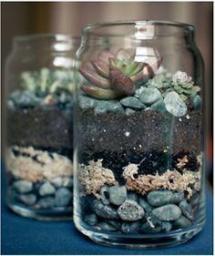 succulents in a jar :)