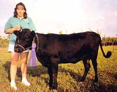 Dexter Cattle.  The perfect small cow for the small farm.  Can pull a plow or wagon, produces 1 - 2 gallons of milk a day and provides lean meat ( 250 lbs at 12 mos old and up to 500 lbs by 24 mos old).  They eat half as much as a full grown cow and 1 cow can be sustained on 1/2 acre.  These cattle are not hybrids or cross breed to obtain their size or attributes.  Originally from Ireland and imported to the USA