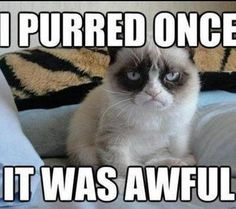 Not a fan of grump cat but this one is great