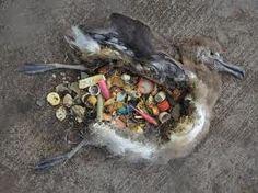 vogel_plastic_3