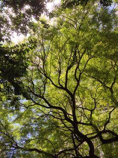 Árvore Centro - São Paulo