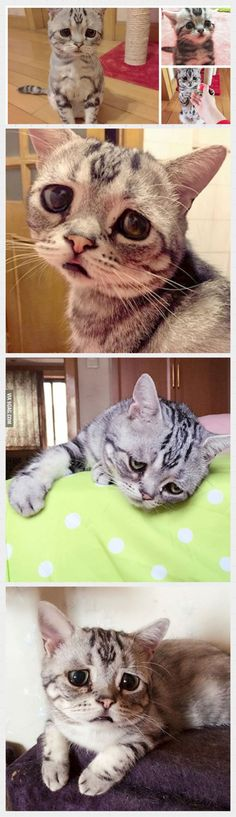 Luhu, the saddest cat in the world. Internet breaking in 3, 2, 1... - 9GAG
