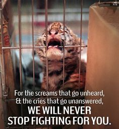 Animals are sentient beings. We must learn to treat them with dignity.