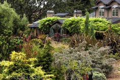 The house seen from the hill, through a mixed array of conifers and other foliage plants. An enormous array of color and texture are provided by foliage alone!  Click directly on the photo to enlarge it in a pop-up.