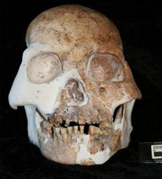 "Skull of ""the people of the red deer cave"",  the youngest known prehistoric population who do not look like modern humans (fossils dated between 14,500 and 11,500 years old), unearthed in some caves in the Guangxi Zhuang region of China."