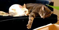 Cuddly friends! - Imgur