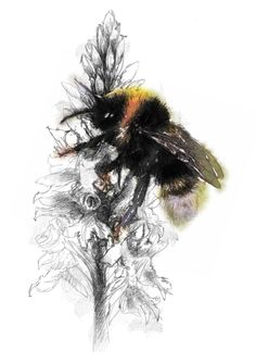 Bumble bee, Artist Sean Briggs producing a sketch a day, prints available at https://www.etsy.com/uk/shop/SketchyLife  #art #bee #drawing #http://etsy.me/1rARc0J