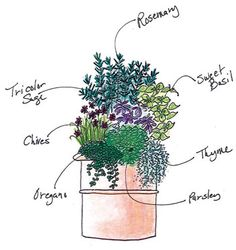 Spring Herb Container Garden Recipe