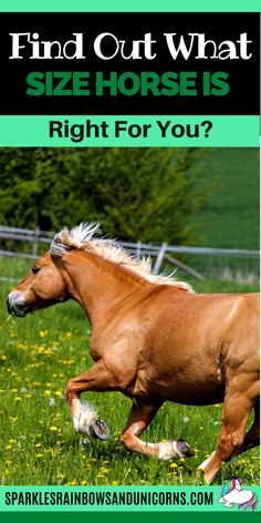 When you decide that you want to buy or lease a horse, you will probably ask yourself 'What size horse is right for me?'  Maybe you are just curious what size horse fits you best.Generally you can ride horses in a  range of sizes and be okay. However it's possible to be too big or  small for a horse as well. In this post you'll figure out what the ideal  horse size range is for you.  So how do you figure out what size horse is ideal for you? Keep reading... Horseback Riding Tips, Horse Riding Tips, Horse Care Tips, Horse Facts, Pet Vet, Western Pleasure, Pet Life, Horse Training, Horses
