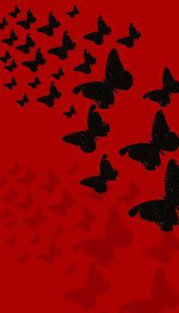 Red Butterflies Wallpaper Butterfly Wallpaper Backgrounds Butterfly Wallpaper Red And Black Wallpaper