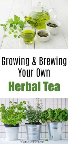 Herbs Gardening How To Grow An Herbal Tea Garden- Love herb tea? See how simple it can be to grow your own herbal tea garden! First, let's look at the types of herbs ideal for tea making Diy Gardening, Organic Gardening, Vegetable Gardening, Indoor Herb Gardening, Container Gardening, Pallet Gardening, Apartment Gardening, Hydroponic Gardening, Gardens