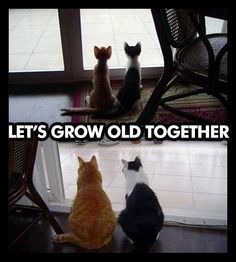Growing old together. Cute animal pictures and happy feel good pictures. Steve jobs and bob marley quotes - adorable animals, bulldog Crazy Cat Lady, Crazy Cats, Funny Cute, The Funny, Hilarious, Crazy Funny, I Love Cats, Cute Cats, Animal Pictures