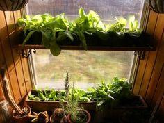 LOTS of homesteading information, including plans for a Solar Dehydrator! Indoor Gardening, Organic Gardening, Dehydrators, Backyard Farming, Renewable Energy, Four Seasons, Garden Projects, Lettuce, Homesteading
