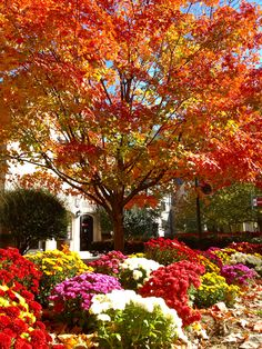 Indiana University in fall. Photo by Margaux Farrell