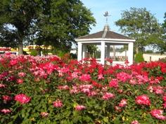 Rose Garden at Huntington Park Newport News Va, New Hampton, Huntington Park, The Hamptons, Places Ive Been, Gazebo, Virginia, To Go, Outdoor Structures