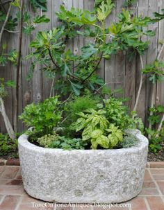 Tone on Tone: A Trough Herb Planter