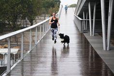 Andreea nous livre ses 5 bonnes raisons pour se mettre au dog running ! Courir avec un chien a ses bénéfices, découvrez-les avec une vraie pro !