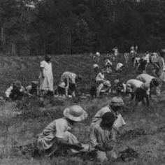 Agricultural laborers pick strawberries on Frank Holman's farm in Sumter County, Alabama :: Alabama Cooperative Extension Service Photographs