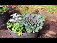 Making a Fall Planter with Kale, Mexican Feather Grass, Pansies and Dusty Miller - YouTube