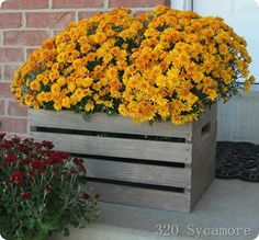 Stain an inexpensive wood crate (from the craft store) and use it to hold mums for Fall. Fall Front Porch!