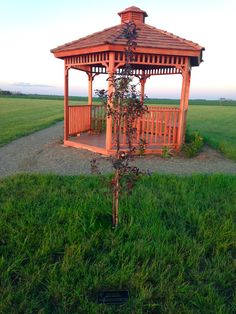 Flowering Crab Apple Tree and Gazebo Memory Tree, Photo Tree, Apple Tree, Gazebo, Photo Galleries, Outdoor Structures, Gallery, Kiosk, Picture Tree