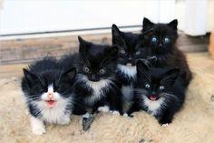 Lovely-KittyCats, catsbeaversandducks: The one on the farthest...