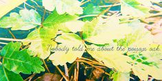 Nobody told me about the poison oak - Suze, The Mediator Series, Meg Cabot