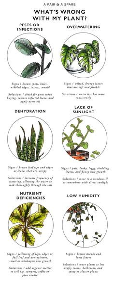 Keep Your Indoor Plants Alive With This Valuable Information! - The Cottage Market Keep Your Indoor Plants Alive With This Valuable Information! - The Cottage Market Container Gardening, Gardening Tips, Organic Gardening, Indoor Gardening, Gardening Services, Gardening Books, Vintage Gardening, Kitchen Gardening, Gardening Gloves
