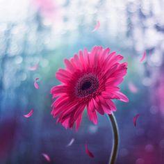 Εικόνες λουλουδιών που σου αλλάζουν τη διάθεση |thetoc.gr