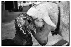 Photo: Gio McCluskey...I'm so becoming a vegetarian.