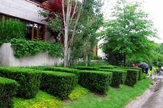Toronto Gardens: A contemporary hedge with panache