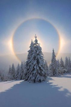 Halo and snow covered trees Fichtelberg Erzgebirge Saxony Germany Print . - Halo and snow covered trees Fichtelberg Erzgebirge Saxony Germany Print B - Winter Wonderland, Snow Covered Trees, Snow Trees, Winter Trees, Image Nature, Nature Nature, Green Nature, Nature Pics, Nature Tree