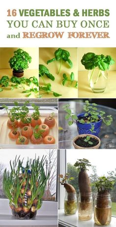 16 Vegetables & Herbs You Can Buy Once and Regrow Forever #gardenideasvegetable