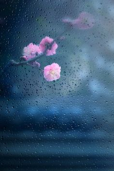 Beautiful Rain Wallpapers for Cool WhatsApp Status and Display Pictures Rain Wallpapers, Cute Wallpaper Backgrounds, Pretty Wallpapers, Nature Wallpaper, Iphone Wallpaper, I Love Rain, Rain Days, Rain Photography, Spring Photography