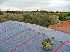 Alijardin, Cubierta vegetal ultraligera mod. Rizoma, 1