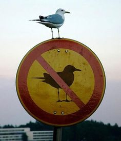 That bird is a rebel! #FunnySigns