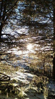 Frozen branches #winter #wicklow #mountains #snow #frozen #branches