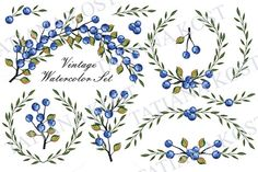 Watercolor set.Blue berries,branches by Tatiana Kost design on Creative Market