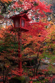 雨の週末。 桜のころは恨みの雨ですが、紅葉には恵みの雨ですね。 彩り鮮やかだった亀岡・鍬山神社の紅葉をお届けします。 (※11月8日撮影) ... Zen Garden Design, Asian Garden, Japanese Maple, Yard Landscaping, Japan Travel, Garden Inspiration, Autumn Leaves, Japanese Gardens, Traditional