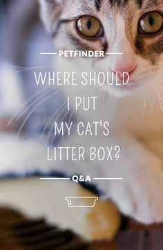 Cats are territorial, and coming into a new home leaves them feeling uneasy. Set aside a small area (like a bathroom or laundry room) with a litter box, food and water bowls and toys to make them feel right at home. Find out more in Petfinder's guide to the first 30 days with your new cat.