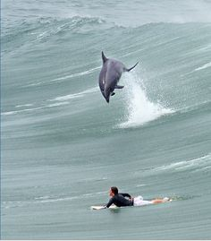 Surfing with a dolphin