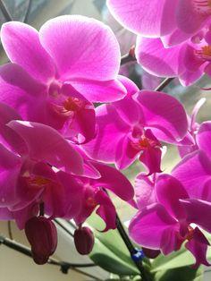 Beautiful flower. Hello spring