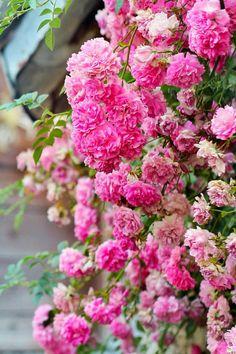 Littlebug 365: วอลเปเปอร์มือถือ รูปดอกไม้สวยๆ