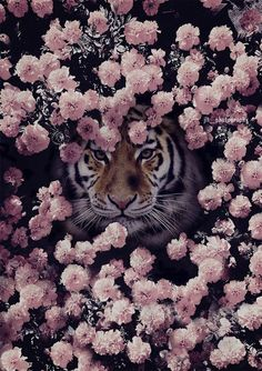 The Tiger. Cute Wallpaper Backgrounds, Pretty Wallpapers, Animal Wallpaper, Most Beautiful Animals, Beautiful Creatures, Animals And Pets, Cute Animals, Spirit Animal, Animal Photography