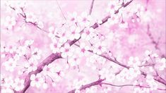29 Beautiful Sakura ideas | anime scenery, anime background, scenery