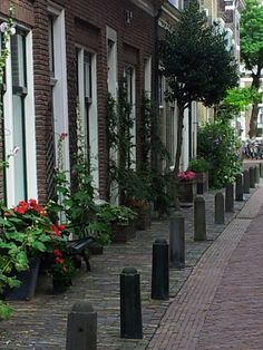 Geveltuin Haarlem Front Gardens, Vertical Gardens, Guerrilla, Yard Ideas, Rooftop, Holland, Amsterdam, Beautiful Homes, Buildings